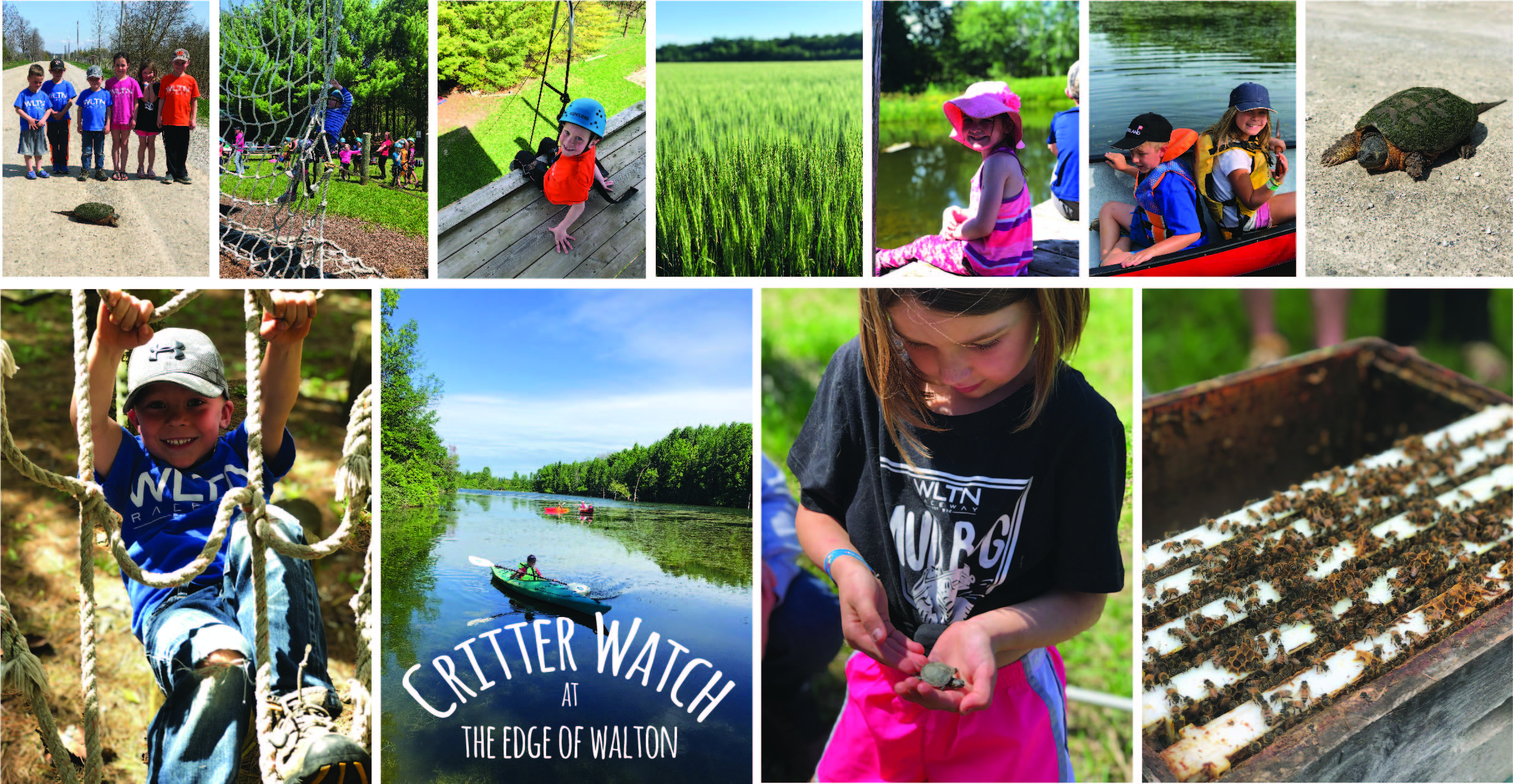 Edge of Walton friends and animals include kids helping a snapping turtle across the road, climbing the tower, fields of wheat, canoeing with siblings, a big snapping turtle, climbing the forest course, canoeing on Lake Walton, a baby painted turtle and beehives!